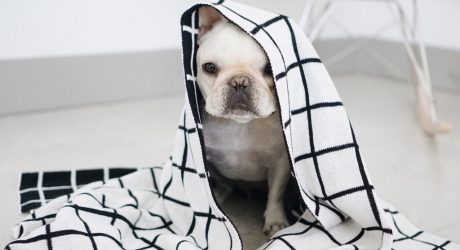 Modern Dog Clothing and Accessories from Pipolli