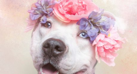 <i>Flower Power: Pit Bulls of the Revolution</i> Photo Series by Sophie Gamand