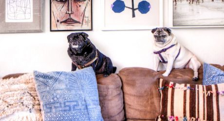 Spotted: 1950s Ranch House — and Pugs!