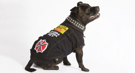 PetHaus Battle Jackets for Dogs