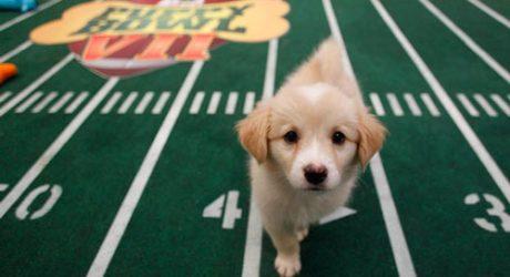 Animal Planet's Puppy Bowl VII
