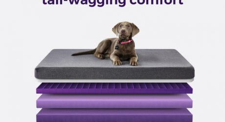 Purple Mattress Pet Beds