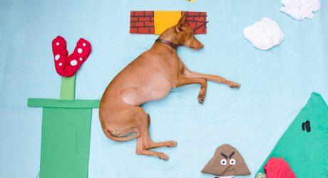 Adventures While Sleeping: Dog Photography by Sara Rehnmark