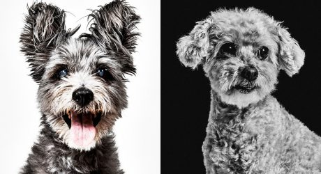 Dog Portraits from Photographer Shayan Asgharnia