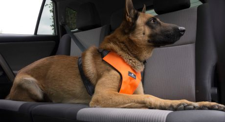 Sleepypod Clickit Sport: 2-in-1 Dog Safety Seatbelt and Walking Harness
