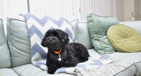 Spotted! Stylish Modern Dogs on Apartment Therapy