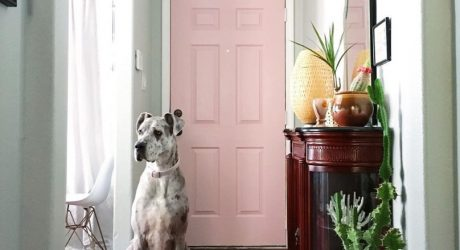 Spotted: A Great Dane and A Yorkie Share a Colorful New Mexico Home