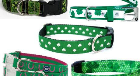 Green Collars for St. Patrick?s Day