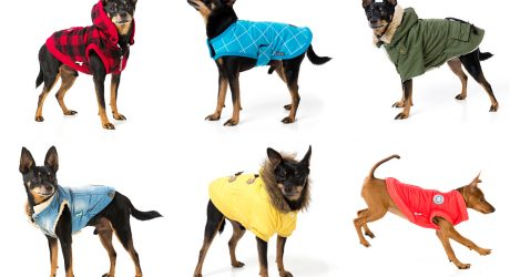 Stylish Dog Jackets and Coats from FuzzYard