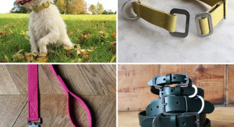 Modern Dog Collars and Leads from Hindquarters