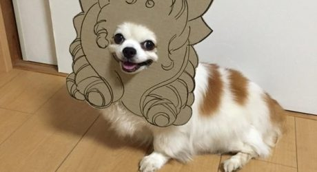 myouonnin's Awesome Cardboard Cutout Dog Costumes