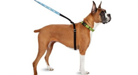 ThunderLeash 2-in-1 Dog Leash and No-Pull Harness