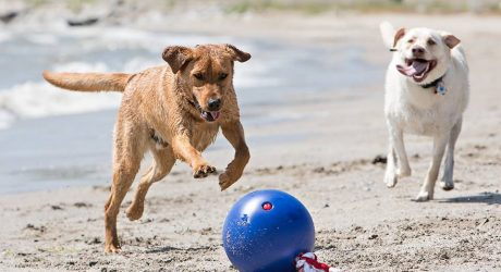 Tuggo: A Water-Weighted Exercise Toy for Dogs