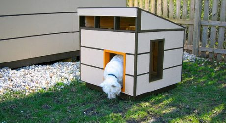 Modern Shed Meets Modern Dog House