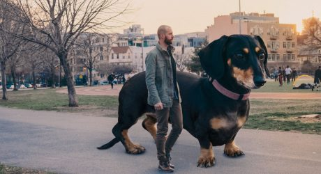 <i>Vivian the Dog Moves to Brooklyn</i>: A Giant Dog in the Big City