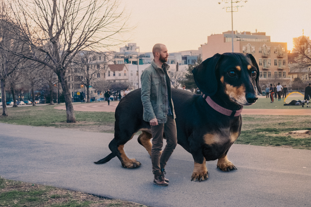 Vivian The Dog Moves To Brooklyn A Giant Dog In The Big City