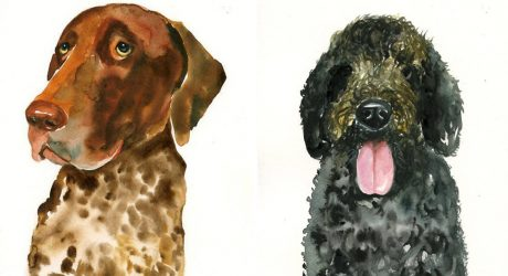 Watercolor Illustrations and Pet Portraits by DIMDI