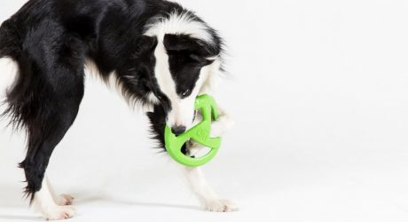 WO Designs Dog Toys: Buy One, Give Two