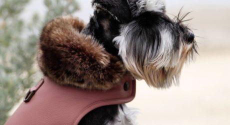 Wolfpack NYC Luxury Leather Dog Jackets