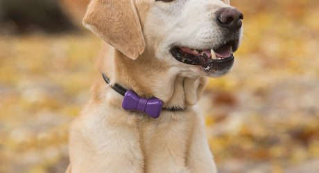 Your Dog Can Text You with The WonderWoof Bow Tie