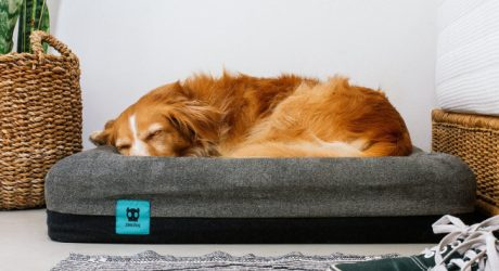 Zee.Bed from Zee.Dog