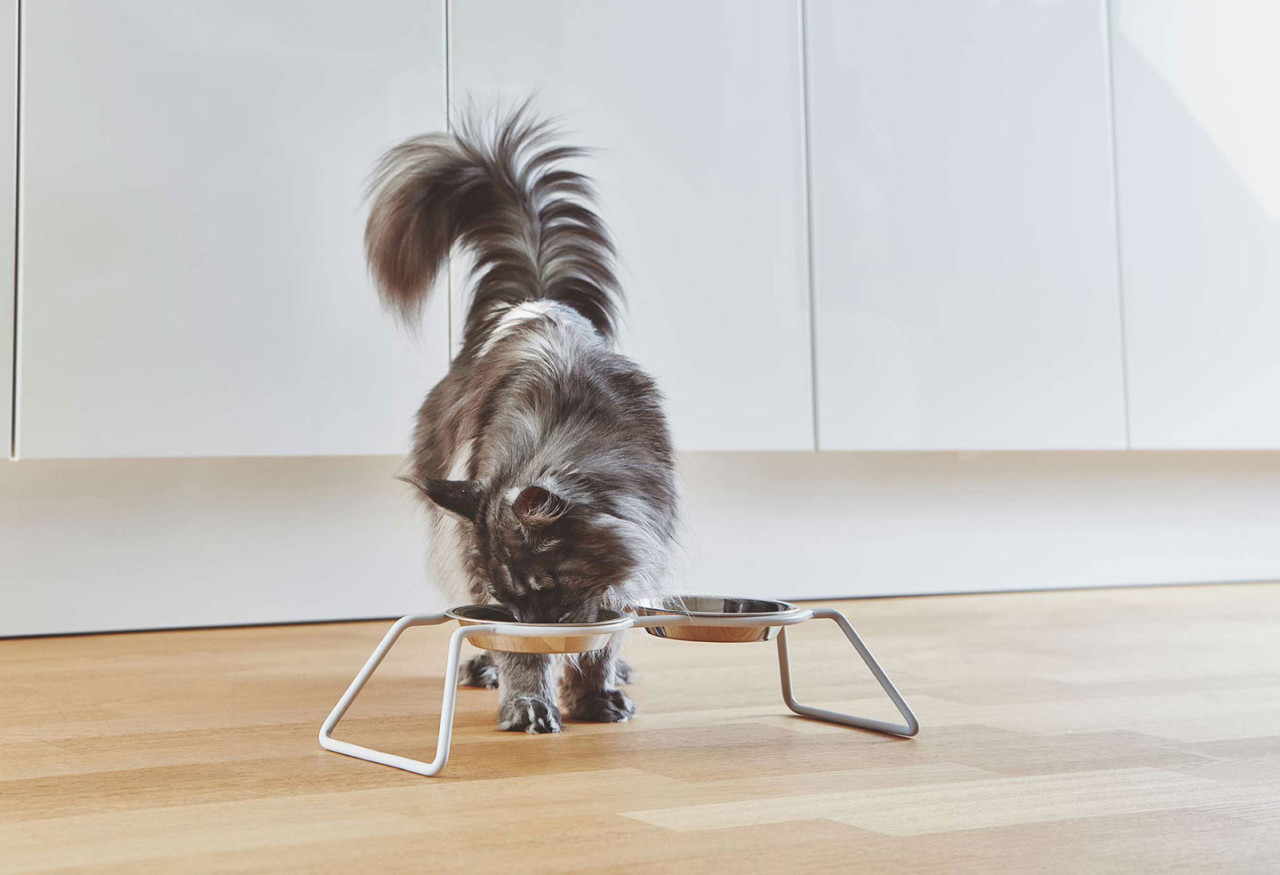 New Cena Cat Feeder From MiaCara