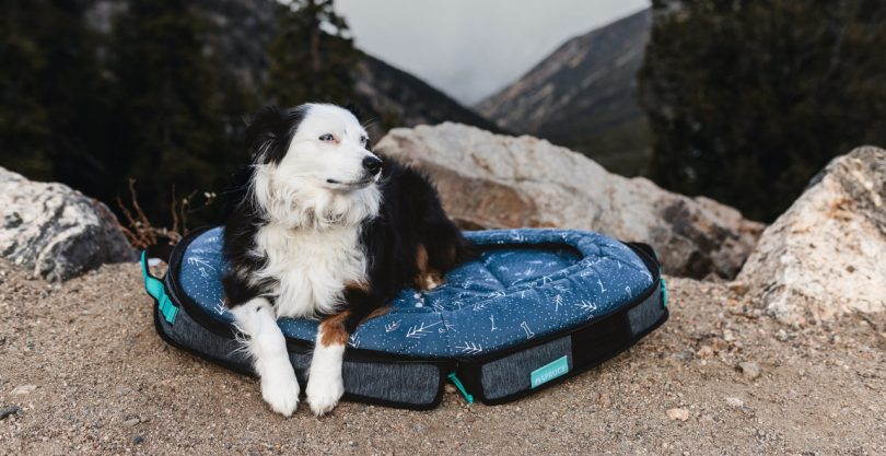 Dog Travel Beds From Spruce Pup