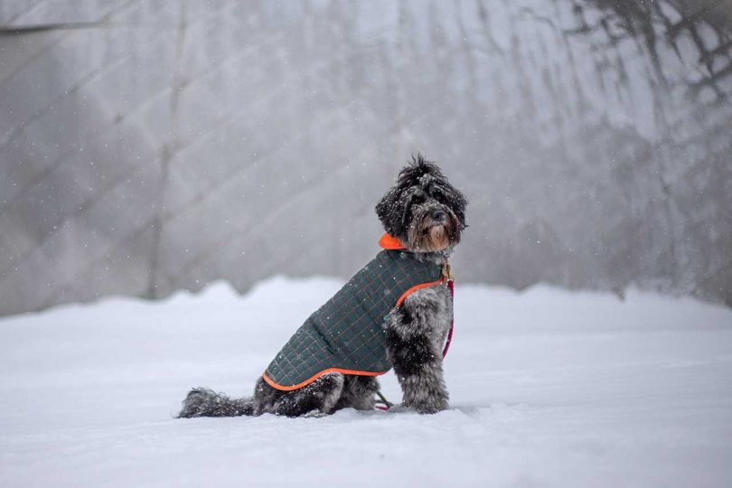 Water-Resistant Dog Coats From Paco & Lucia