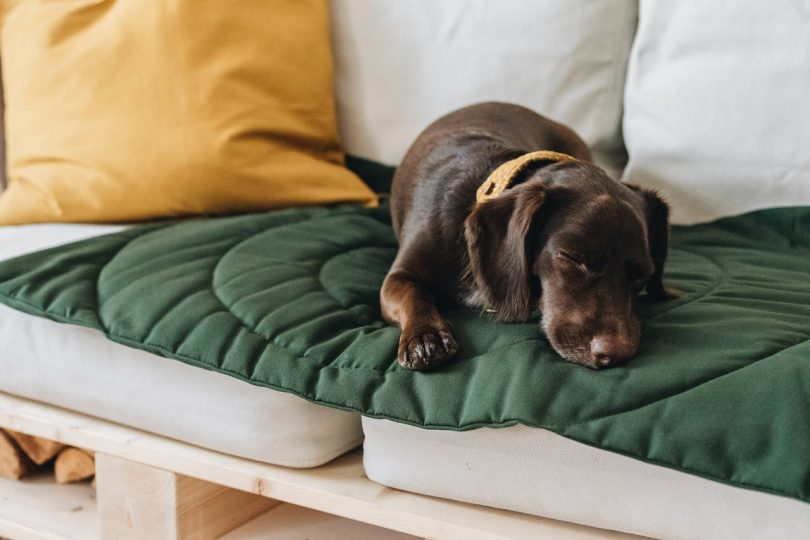The Cozy Compass Travel Blanket for Dogs by band&roll