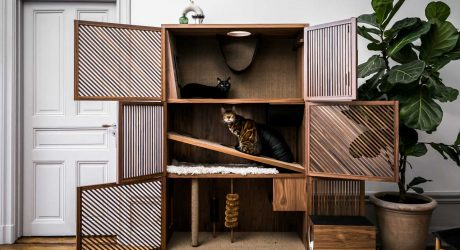 The Cat Flat Gives Cats a Home with 10 Things to Make Them Happy