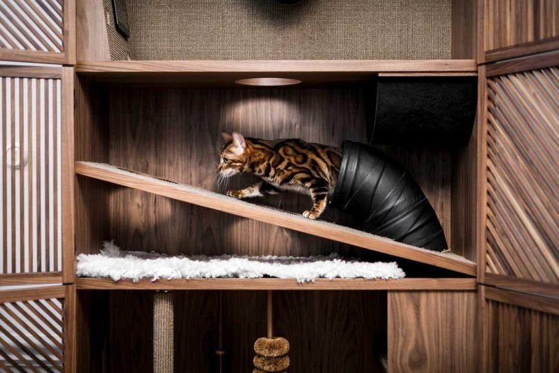 cat climbing modern cat house