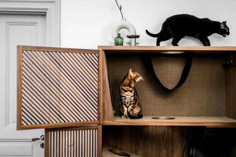 cats playing in The Cat Flat modern cat house
