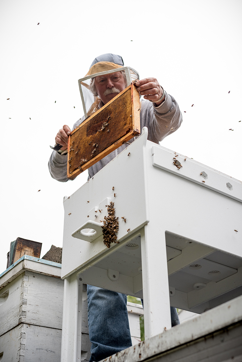 Bee Hive Allows You to Save the Bees From Your Own Backyard - Design Milk