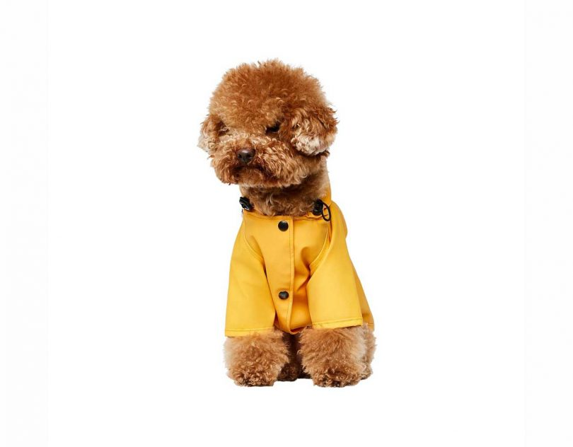Stylish Outerwear for Dogs from The Painter's Wife