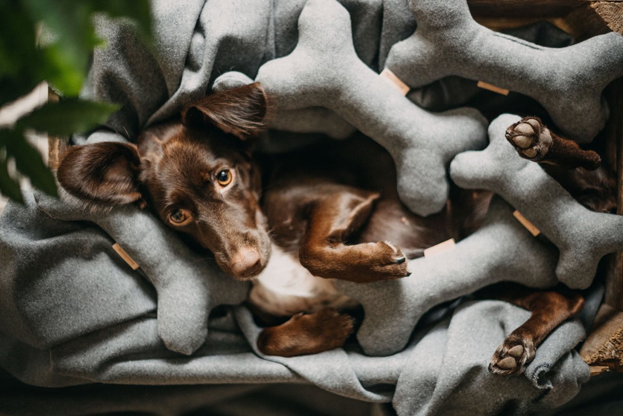 10 Modern Toys to Keep Your Pets Entertained While Cooped Up at Home