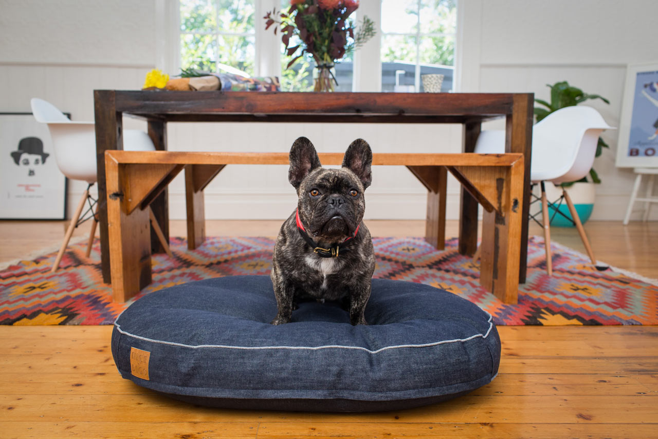 Nice Digs Makes Modern Lifestyle Goods for Discerning Pet Owners
