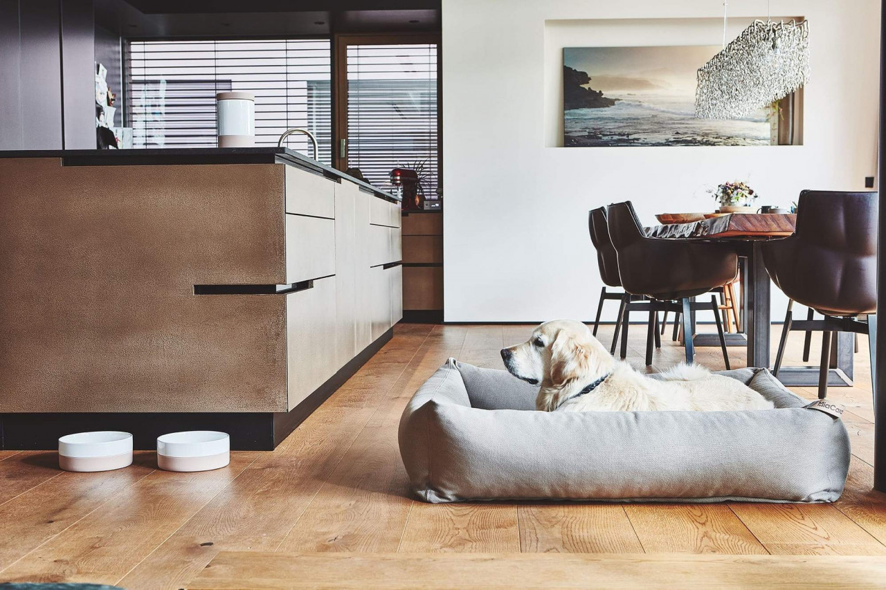 Dog relaxing in dog bed