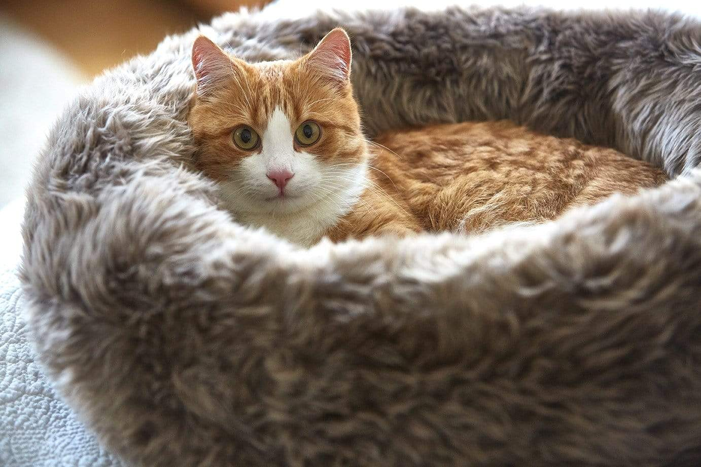 Cat laying in cat bed
