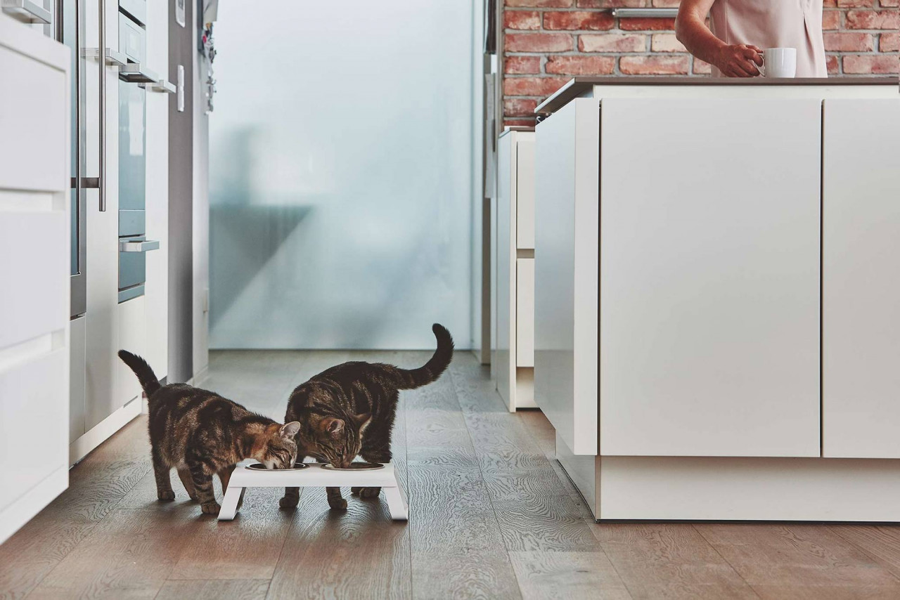 Two cats eating out of food bowl