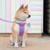 dog in collar and harness
