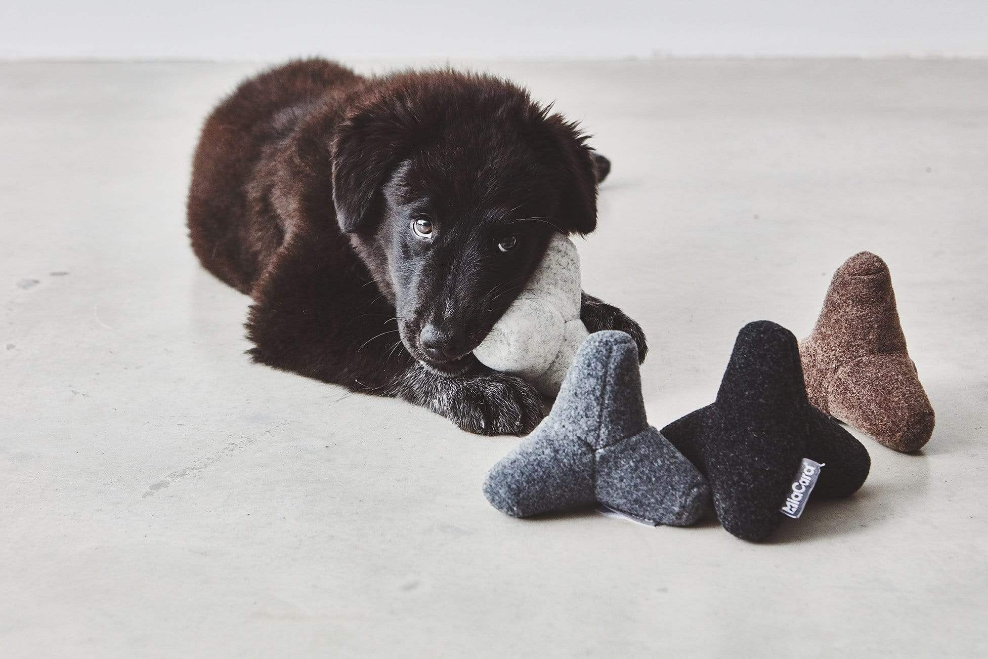 Dog chewing on dog toy — an essential for new pet owners