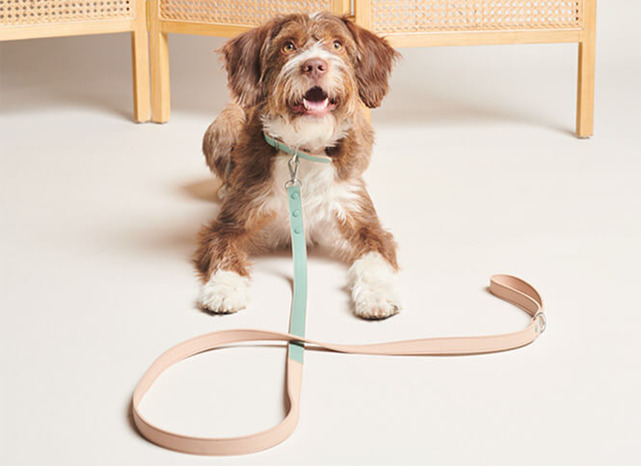 Dog with Pawness leash + collar