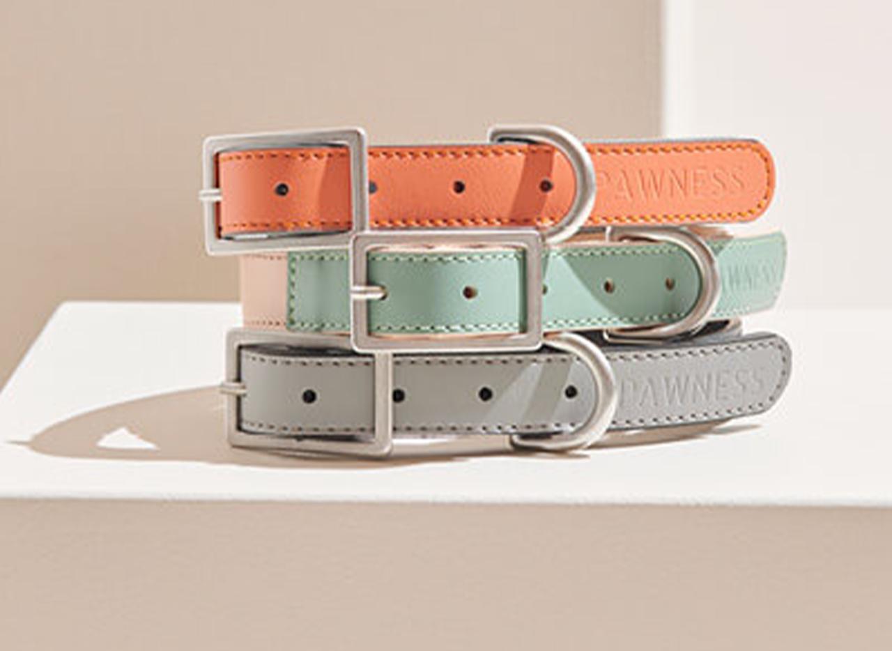 Pawness walk kit collars