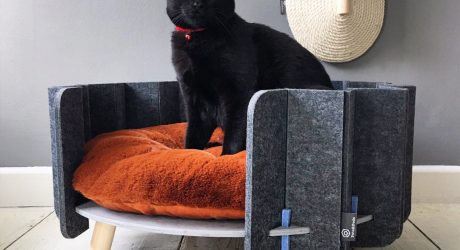 Pets and Pods Makes Modern Pet Furniture Cozy + Functional
