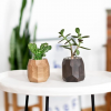 two wooden planters with succulents