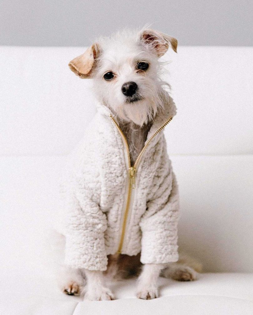 Dog Threads' Swiss Teddy Jacket