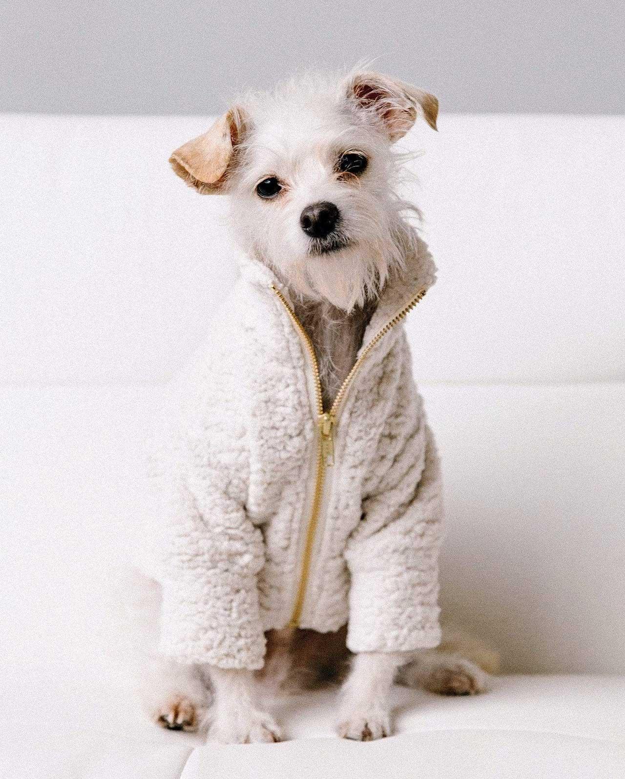 Dog Threads' Swiss Teddy Jacket