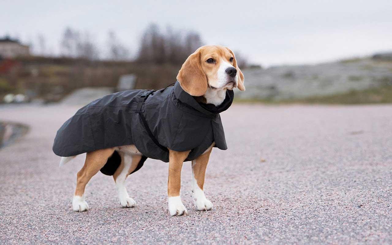Dog wearing PAIKKA Visibility Raincoat