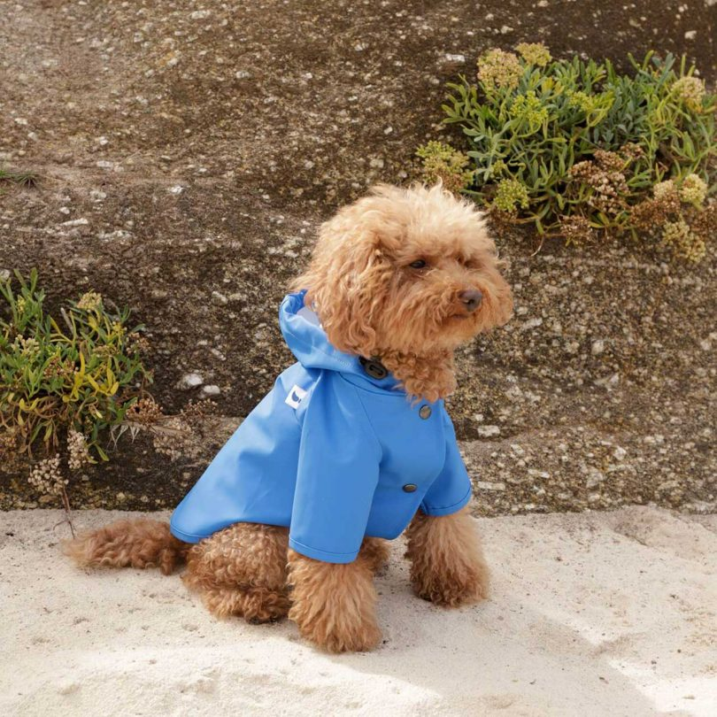 Dog in the Painter's Wife Sarah Style raincoat