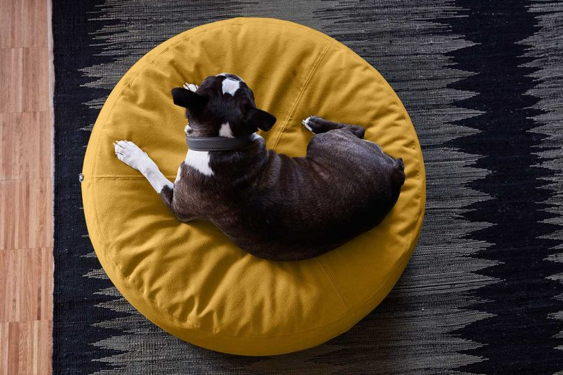 dog curled up on pet bed